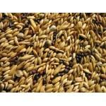 Germoirs, Graines de vie et graines à germées
